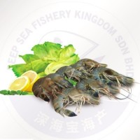 Black Tiger Prawn HOSO 26/30